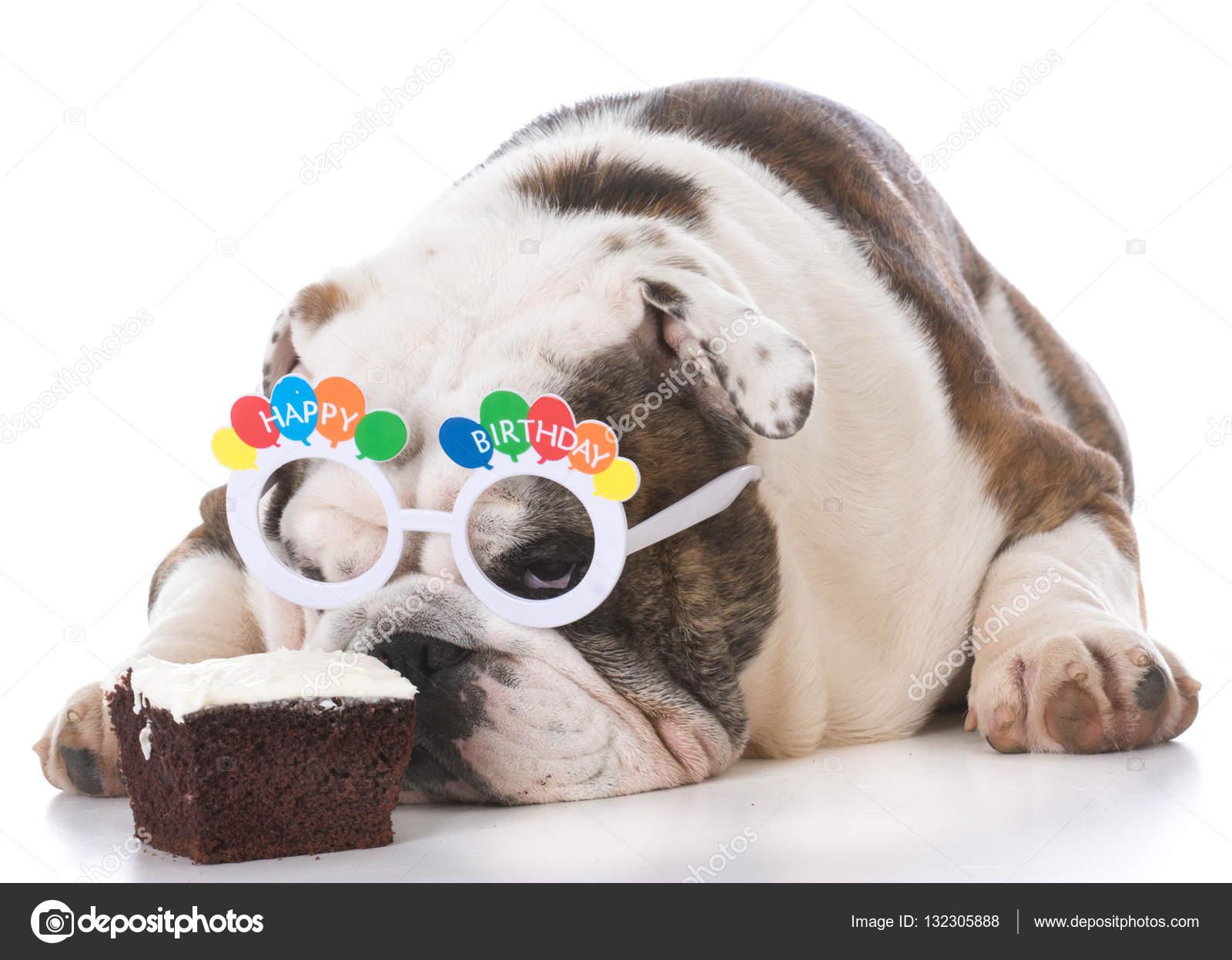 Hond Dragen Verjaardag Brillen Snuiven Taart Stockfoto