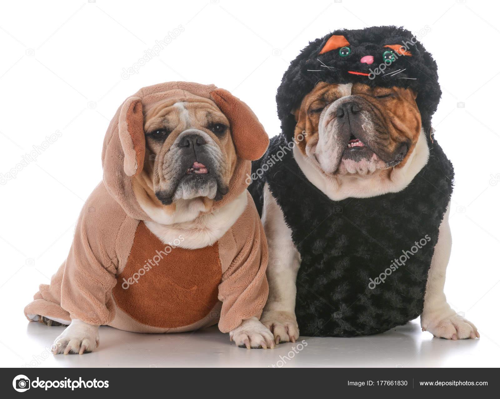 Psy Ubrany Jak Kot I Pies Zdjęcie Stockowe Willeecole 177661830