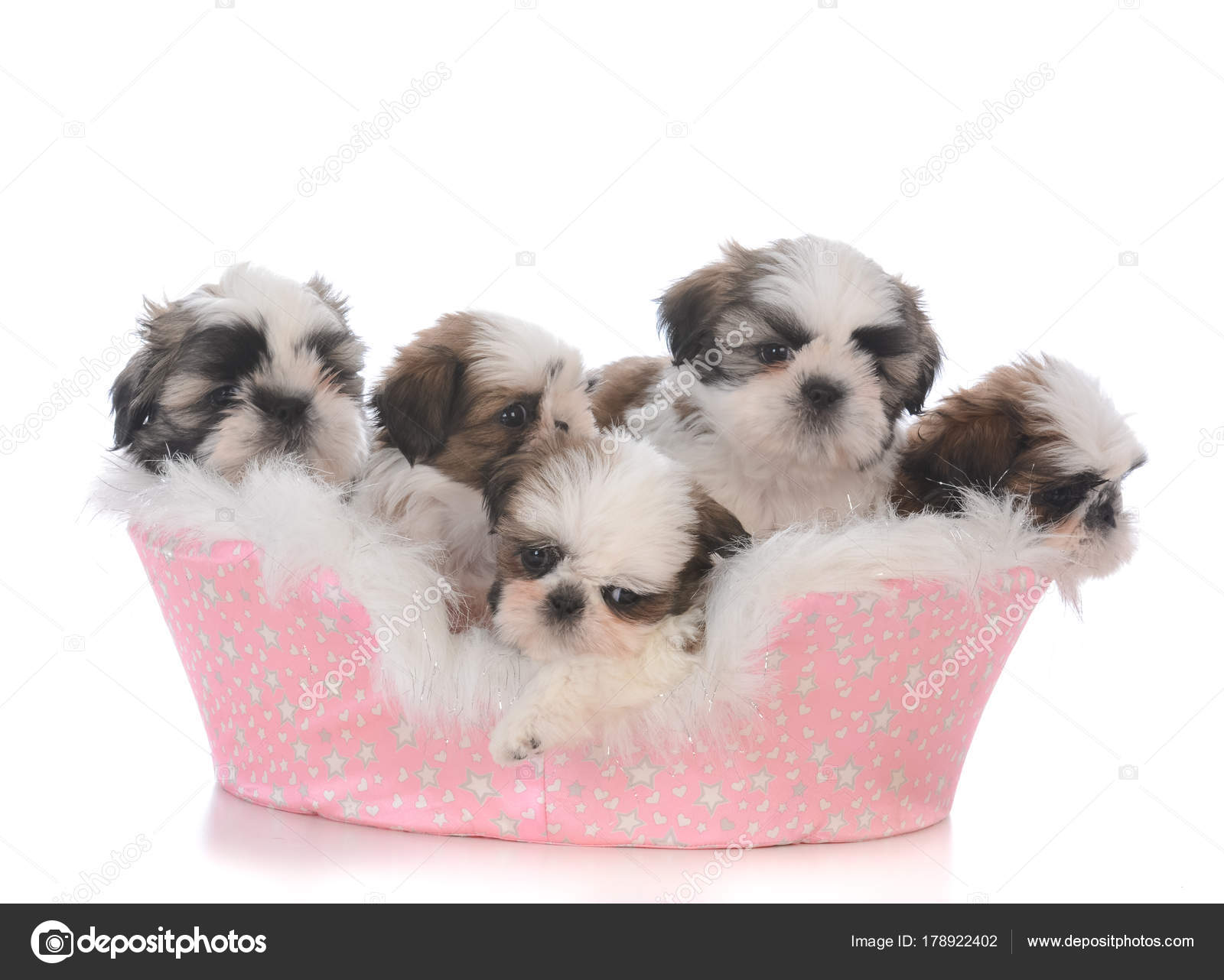 Shih Tzu Dog Bed Size