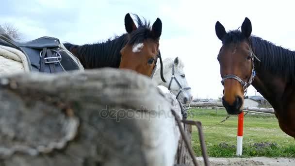 Horses against the sky on horse farm, 4k