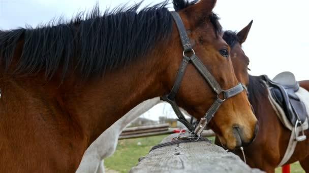 Koně na obloze na koňské farmě, 4k
