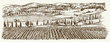 Wide view of vineyard. Vineyard landscape panorama. Hand drawn i