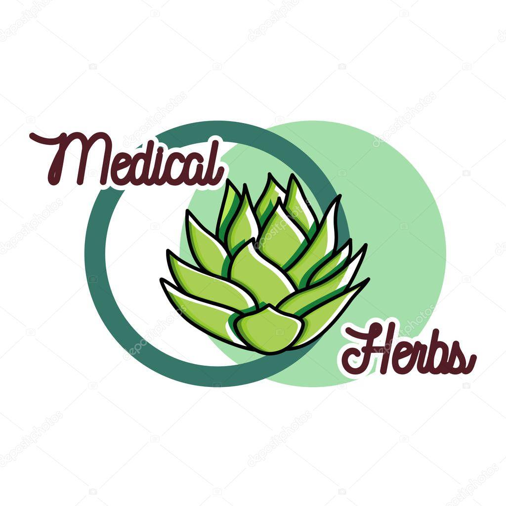 Color vintage medical plants herbs emblem