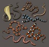 Fényképek Kézzel rajzolt kígyó beállítása
