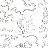 Fényképek Kígyó meghatározott mintát