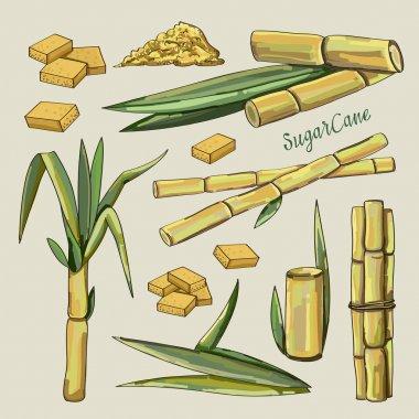 Sugar cane icons