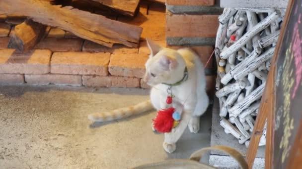 Mladá kočka hrající hračka v kavárně místní kočka