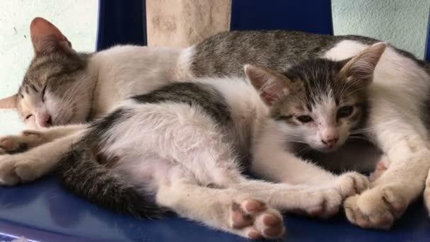 Matka a Kitty kočka spí spolu
