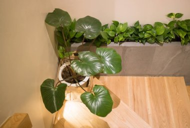 Green Plant In Minimal Room Style