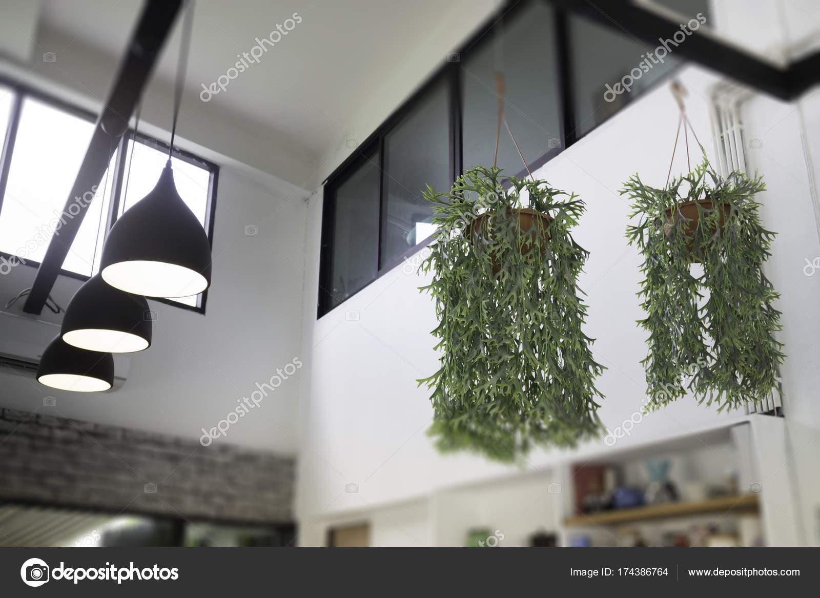 Fern In Plant Pot Hanging On Ceiling Stock Photo C Nalinrat 174386764