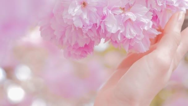 Žena ruka dotýká sakura květy stromu květiny, strom s květinami.