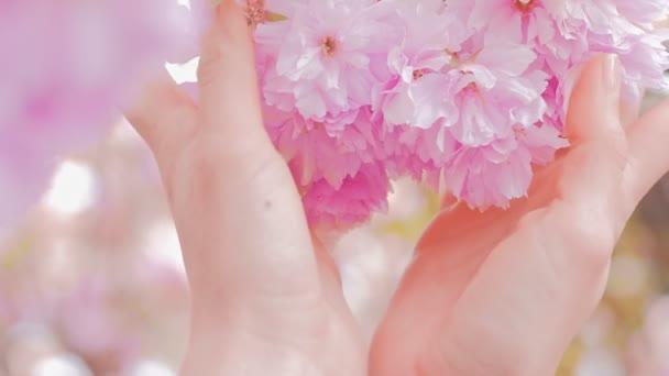 Žena ruce jemně drží sakura květy stromu květiny, strom s květinami.