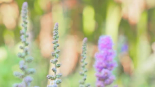 mező virágok, lila virágok, virágok háttér
