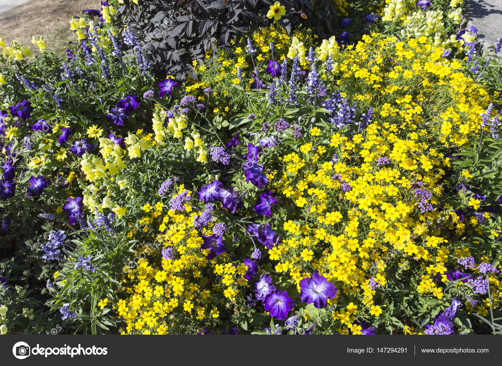 Field With Colorful Blooming Wild Spring Flowers Stock Photo
