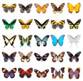 készlet-ból gyönyörű pillangók