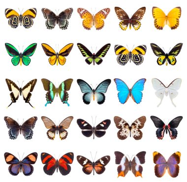 set of beautiful butterflies