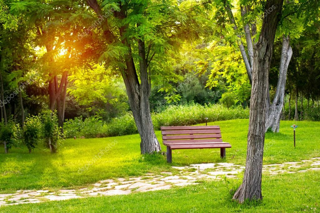 Empty wooden bench