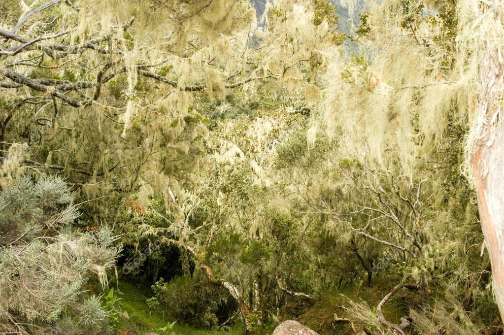 Lichen on tree branches