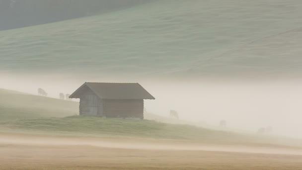 Morgennebel auf den Wiesen der Alpen