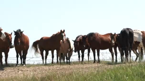 Schlange von Pferden rasten an sonnigem Tag auf einer Wiese in North Dakota.