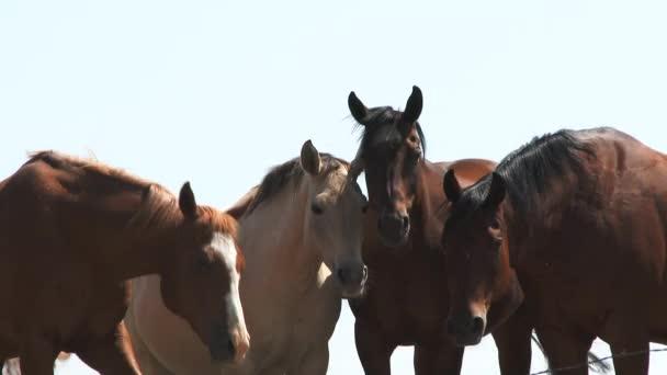 Zblízka na čtyřech koních při pohledu na naši cestu proti bílé obloze v Severní Dakotě na slunný den.