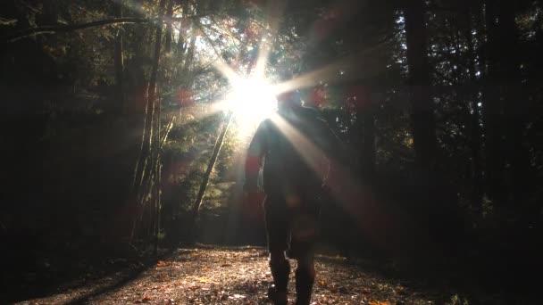 Z černé, člověk se objeví a jde dolů sluncem osvětlené stezky pokryté listím v lese v klidném podzimním dni.