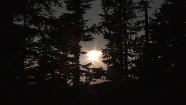 Kamera přiblížit přes lesní stromy na slunce a mrak na obloze s přechodem od jasného světla k černému blednutí.