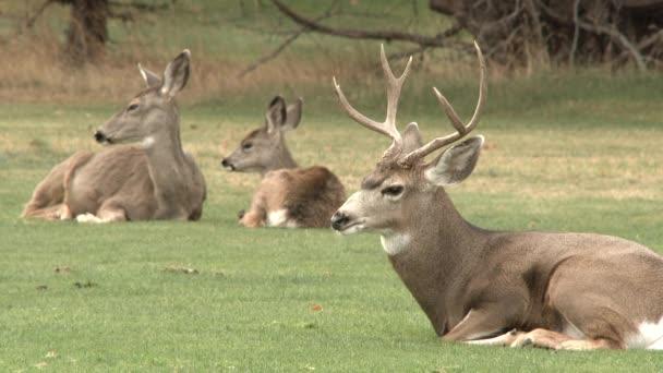 Mamka, taťka a jelen, co spolu relaxují v divočině.