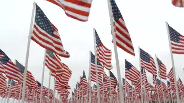 United States of America flags fill the frame, blowing in the wind at memorial.