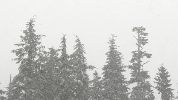Erdőfák fölött zuhog a hó.