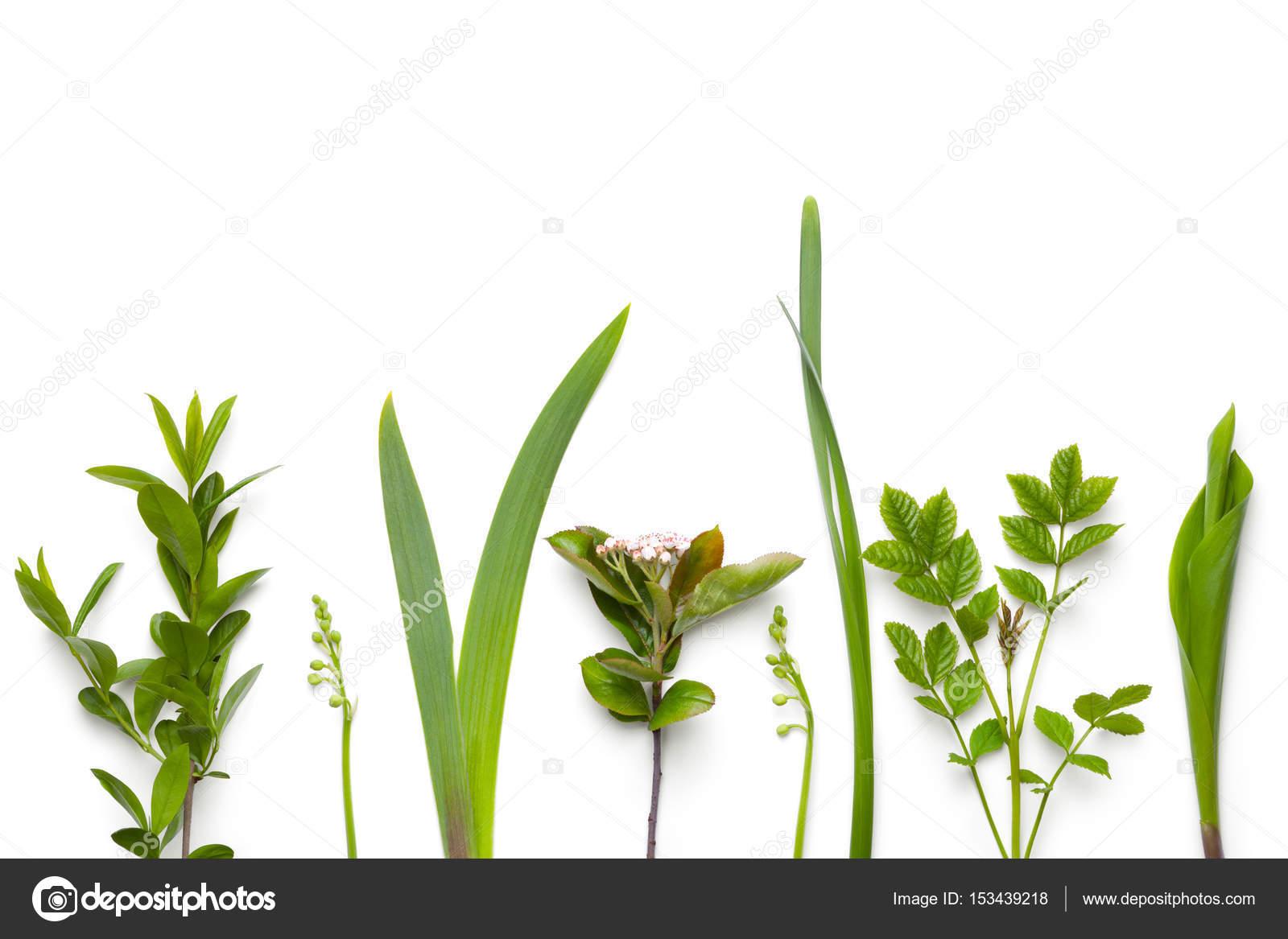 Entzückend Grüne Pflanzen Sammlung Von Grüne Isoliert Auf Weißem Hintergrund — Stockfoto