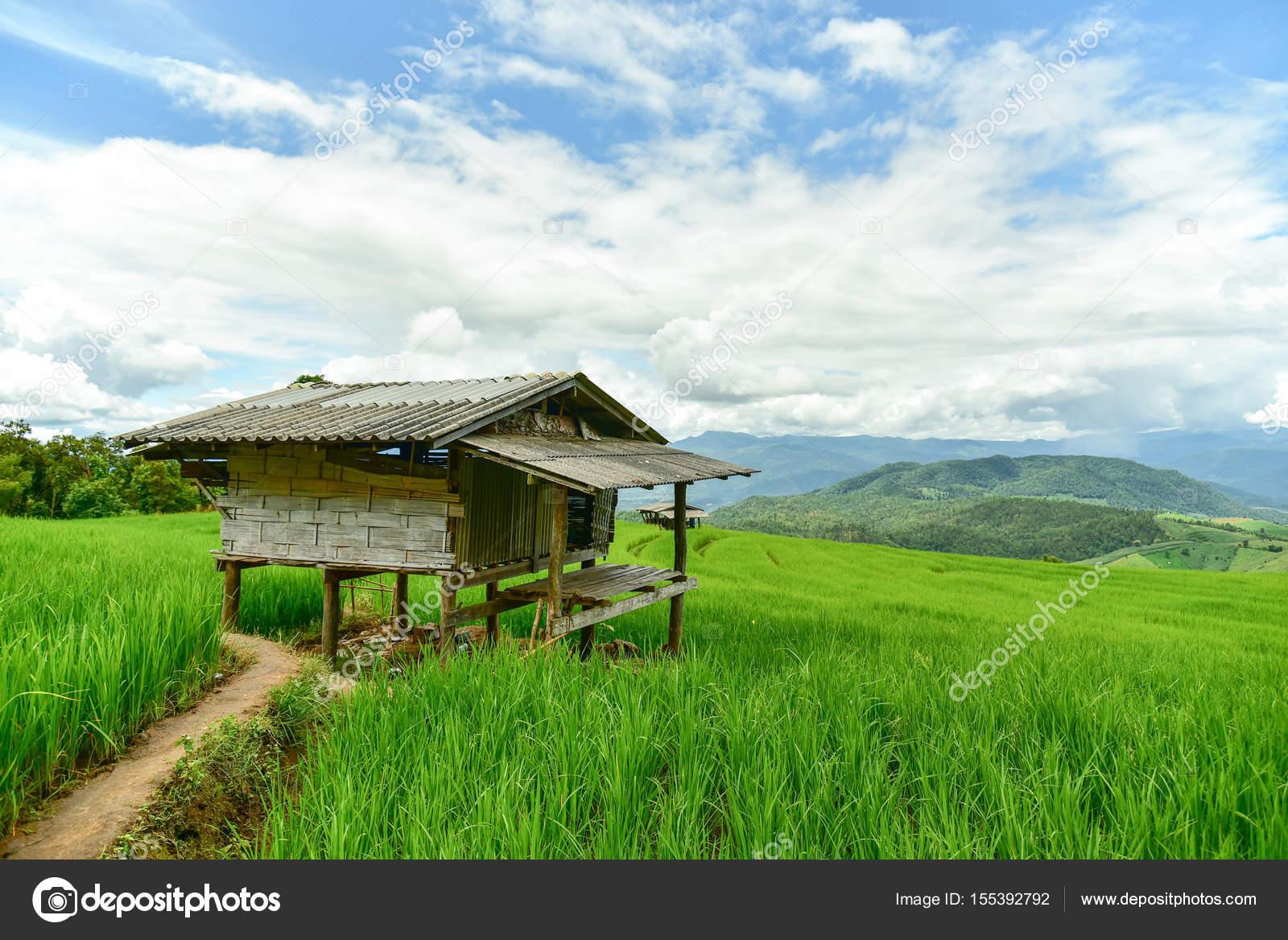 Campo di riso a terrazze verdi presso Pa Bong Piang village — Foto ...