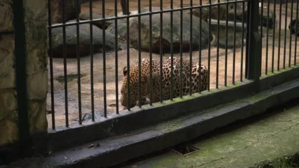 Šťastná rodina dívá na Leopard během návštěvy v Zoo