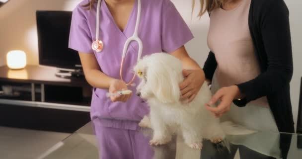 Veterináře a majitele psa dávat lék lék na psa