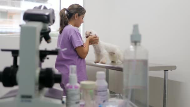 Návštěva veterinární klinice Vet a nemocný pes