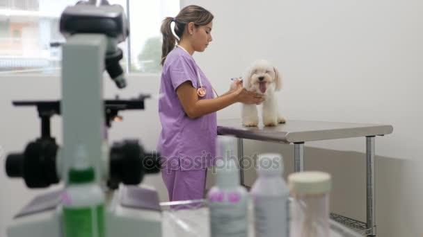 Lékař návštěvu pes ve studiu s Vet a hezký vztah