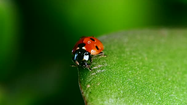Red ladybug sitting on blade of grass against nature background