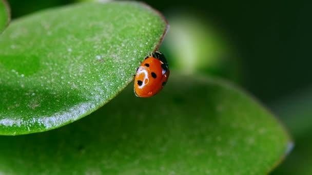 ladybug sitting on blade of grass against nature background