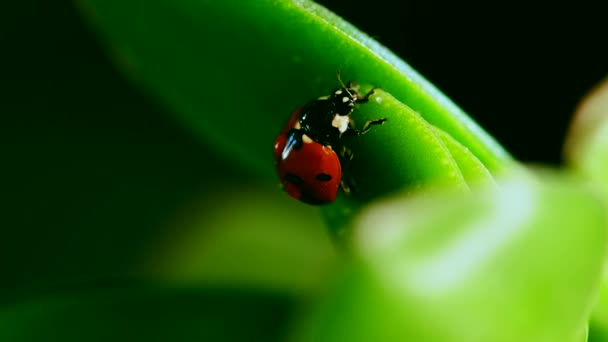 red ladybug crawl on blade of grass against blurred background