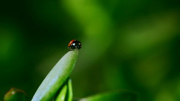 ladybug on blade of grass against blurred background