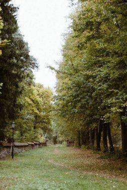 Park alley with fallen leaves. Autumn landscape scene stock vector