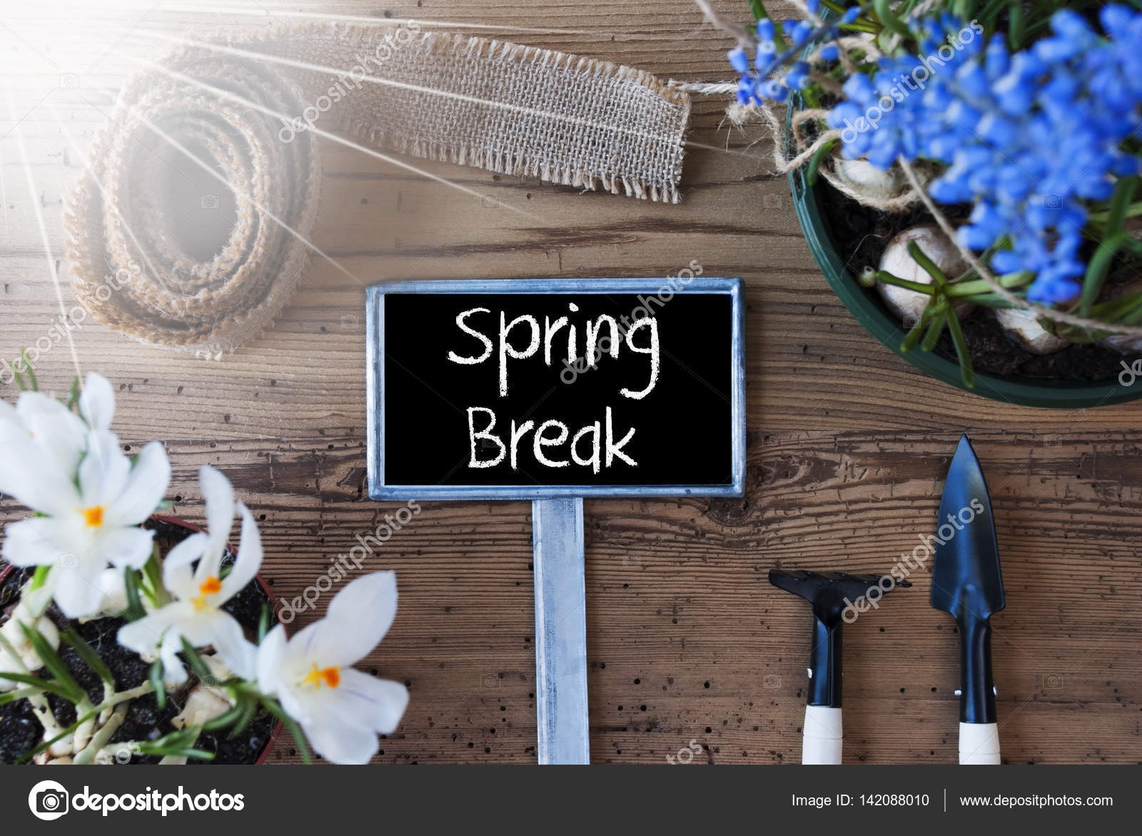 Sunny Flowers Sign Text Spring Break Stock Photo Nelosa 142088010