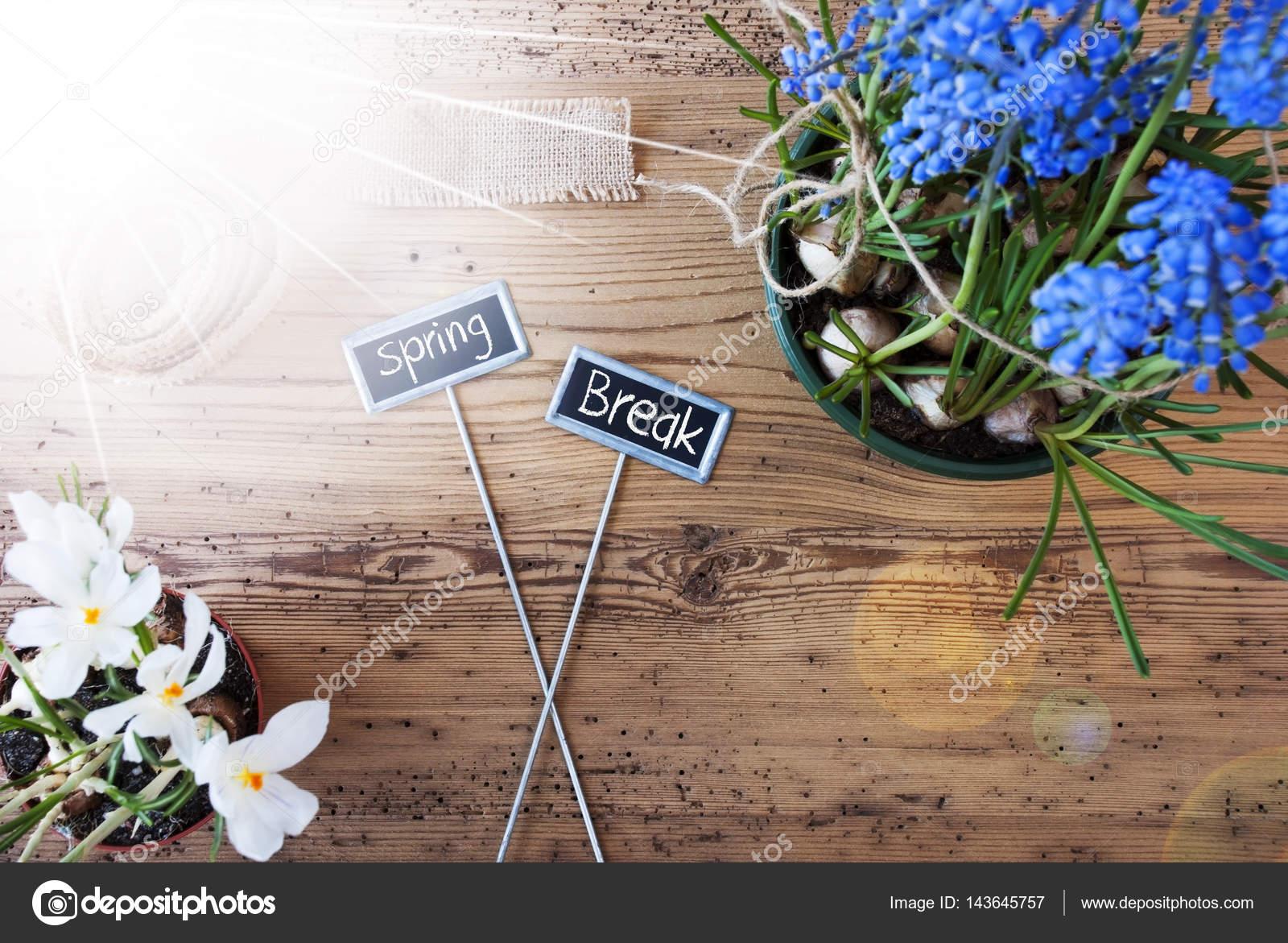Sunny Flowers Signs Text Spring Break Stock Photo Nelosa