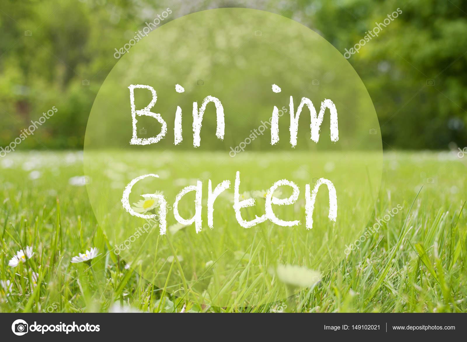 Gras Wiese Blumen Gänseblümchen Im Garten Bedeutet Im Garten