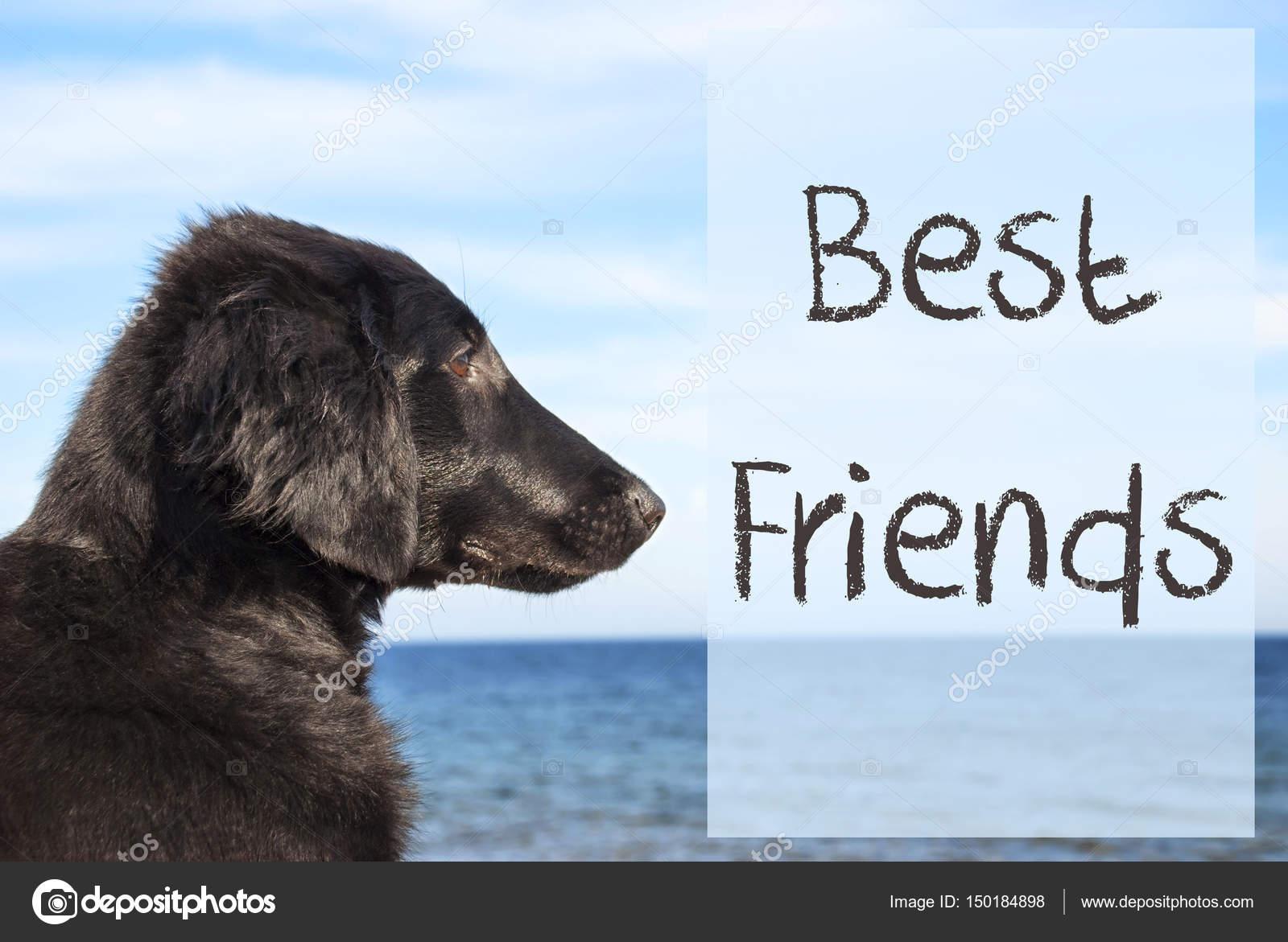 Hond Op De Oceaan Beste Vrienden Van De Tekst Stockfoto