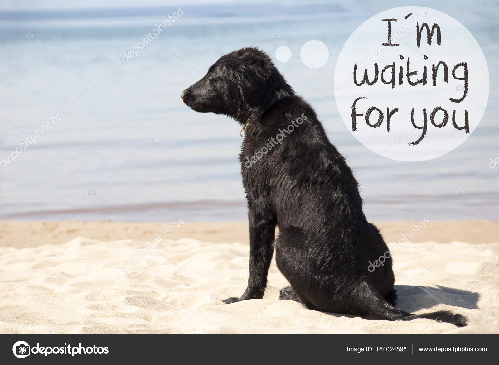 Dog At Sandy Beach Text I Am Waiting For You Stock Photo Nelosa