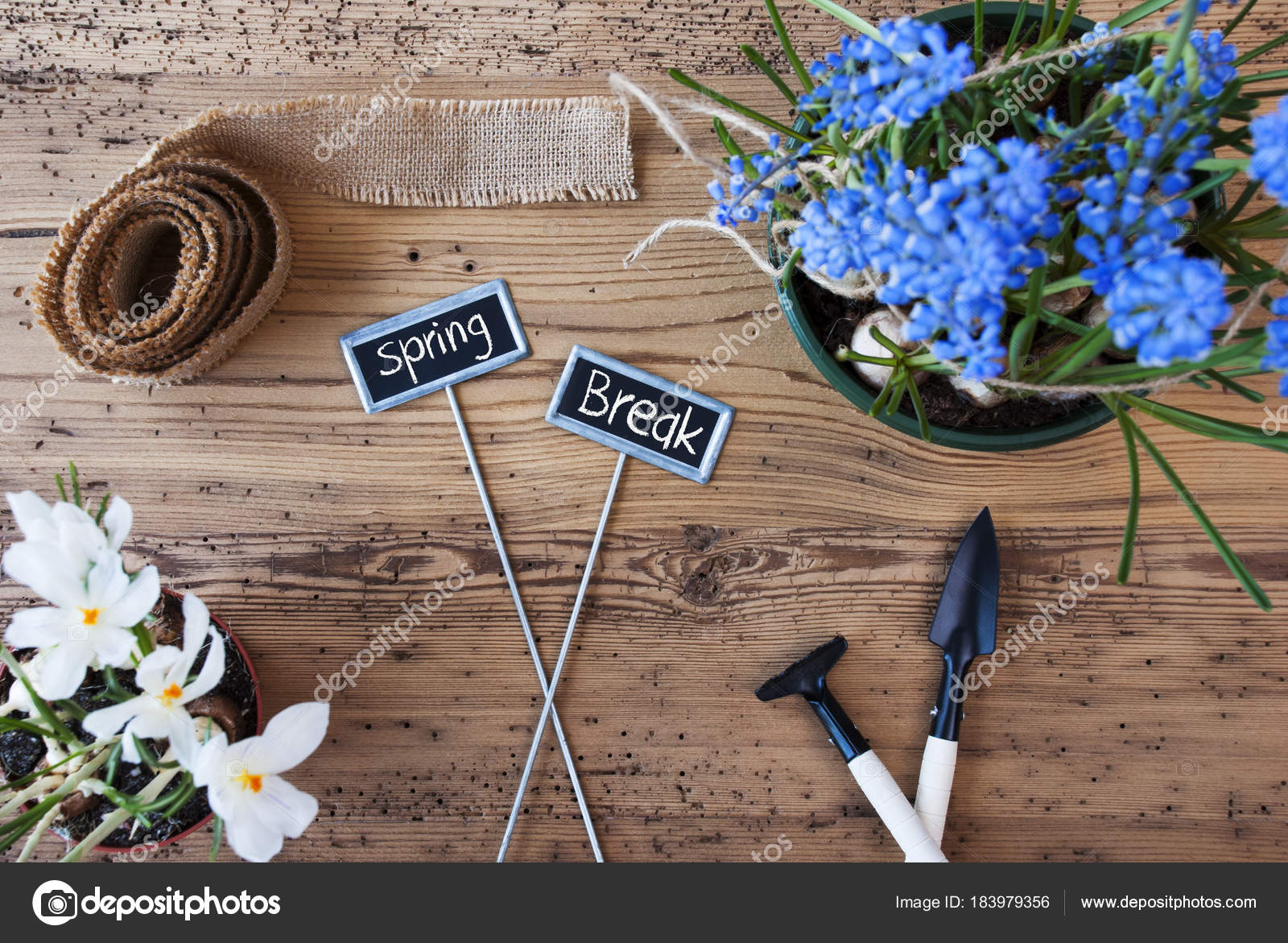 Flowers signs text spring break stock photo nelosa 183979356 two signs with english text spring break spring flowers like grape hyacinth and crocus gardening tools like rake and shovel hemp fabric ribbon mightylinksfo