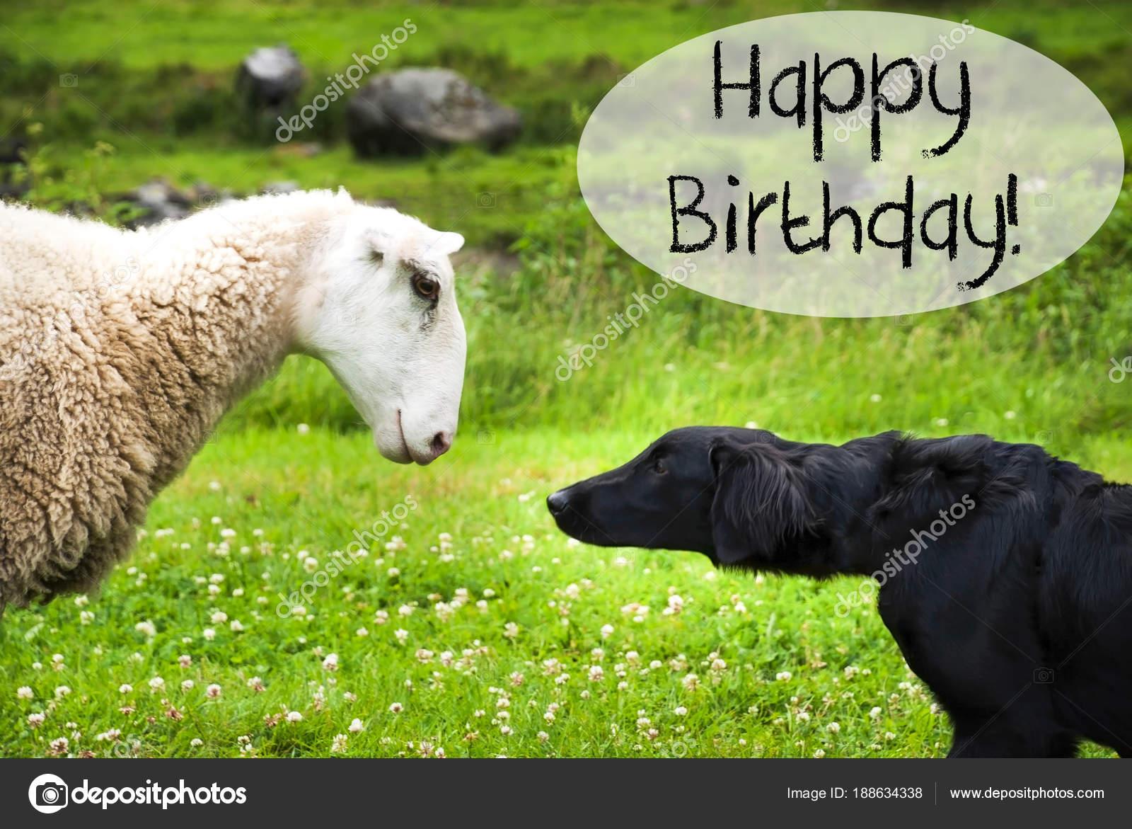 Hond Voldoet Aan Schapen Gelukkige Verjaardag Van Tekst Stockfoto