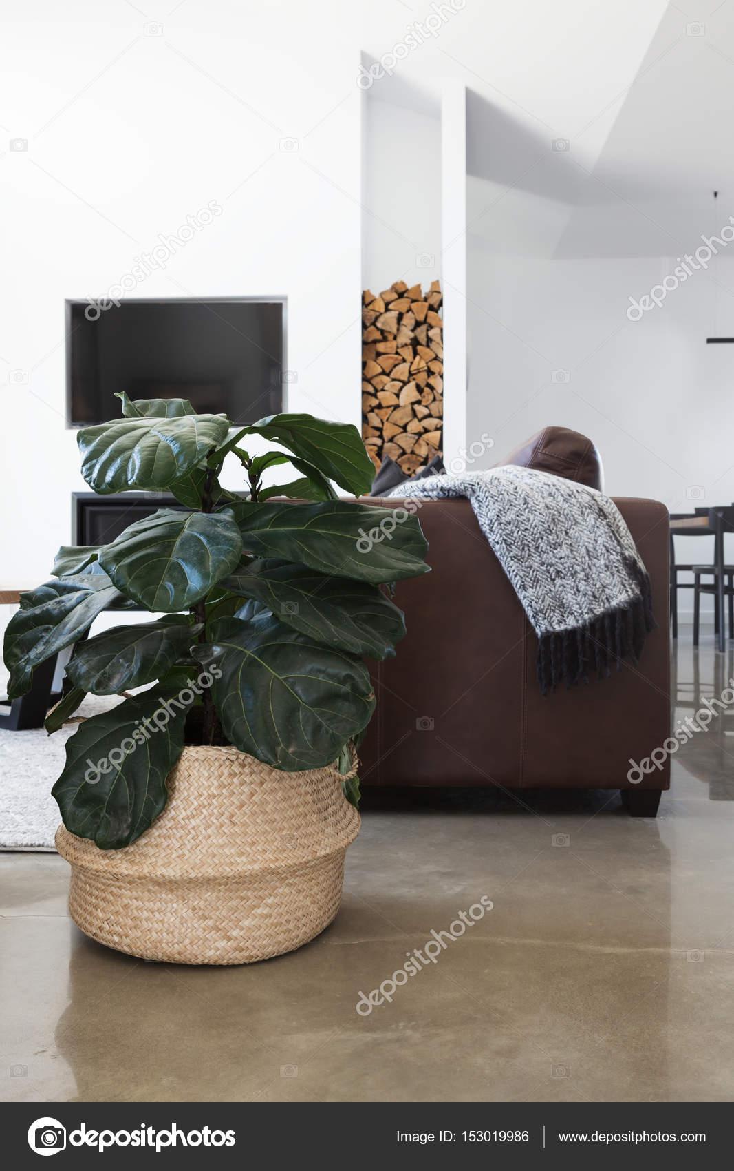 plant in moderne woonkamer — Stockfoto © jodiejohnson #153019986