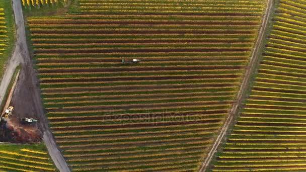 Letecký pohled na podzimní vinice
